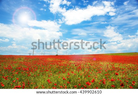 Landscape of poppies field of red flowers in Bulgaria - stock photo
