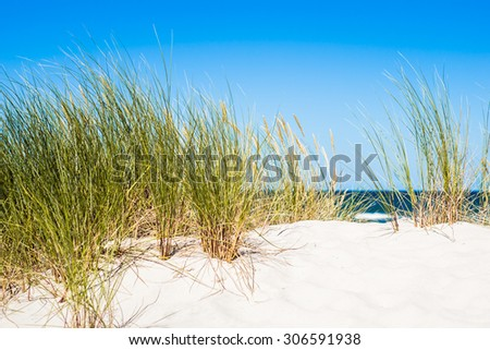 Sea grass stock images royalty free images vectors for Seagrass for landscaping