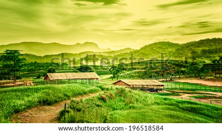 landscape of Tea plantation on the hill with cottage  - stock photo