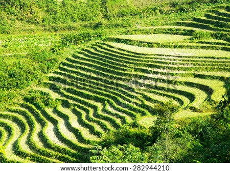 Landscape of Terraced Rice Field hill Sa Pa. Lao cai, Vietnam