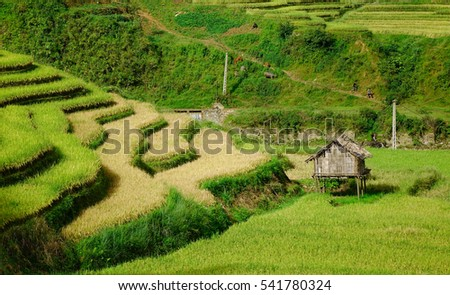Landscape of terraced rice fields in Yen Bai, Northern Vietnam. Yen Bai is an agricultural-based province located in Northern Vietnam.