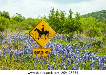 Landscape of Texas Hill Country Terrain with Horse Crossing sign surrounded by bluebonnets.  Mesquite trees and prickly pear with hills and soft clouds in blue sky. - stock photo