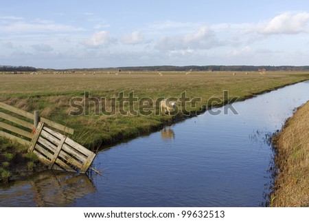 Landscape of the Dutch island Texel with sheep and a fence