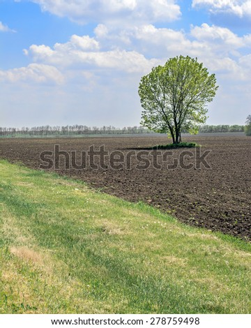 landscape of the field sky and lonely tree