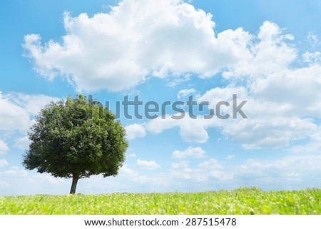 landscape of the green field - stock photo