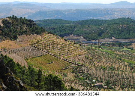 Landscape of the interior of Portugal with several vineyards and olive tree plantations and a blue ridge set of mountains in the background - stock photo