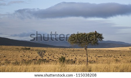 landscape of the savannah in Kenya - stock photo