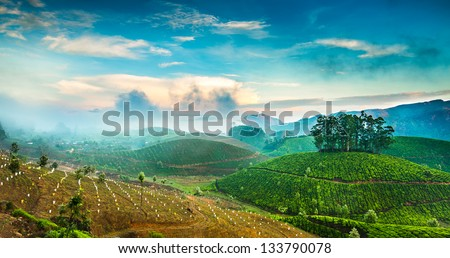 Landscape of the tea plantations in India, Kerala Munnar. - stock photo