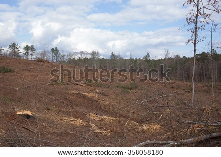 Landscape of tree stumps in freshly harvested pine forest with cloudy blue sky - stock photo