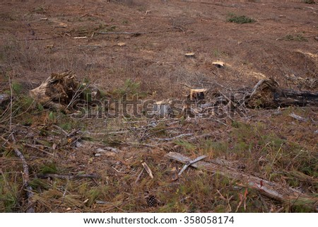 Landscape of tree stumps in harvested pine forest, brown red dirt - stock photo