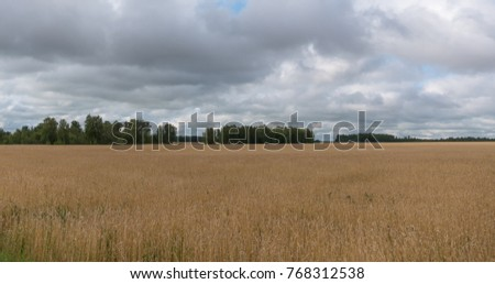 landscape of wheat field at harvest.