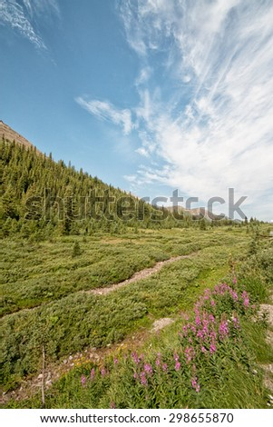 Landscape of wild flowers and a beautiful sky in the Highwood Pass located in Alberta, Canada. - stock photo