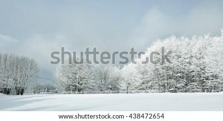 landscape of wood with snow in winter