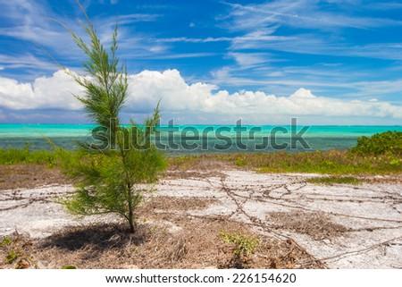 Landscape on the Caribbean tropical island - stock photo