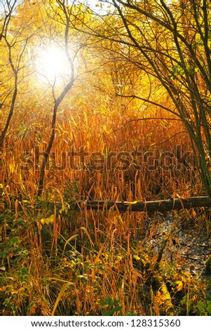 Landscape photo an early morning in the fall - stock photo