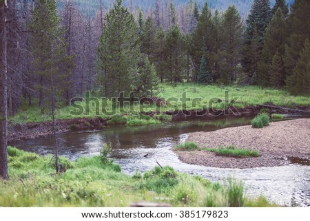 Landscape photo of a forest and a river - beautiful nature. Abstract background.
