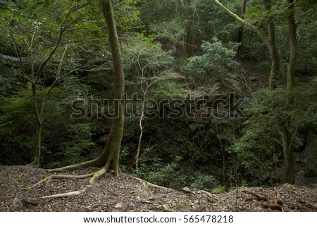 Landscape photography of forest in Japan.