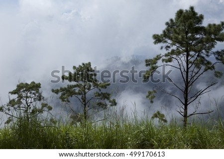 Landscape photography of forest in Northern Thailand.