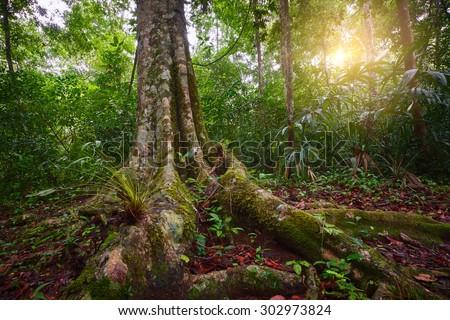 Landscape rain forest National Park Tikal in Guatemala at sunset - stock photo