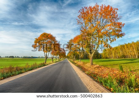 Landscape - road with amazing autumn colors. White clouds and blue sky. Sunny day.