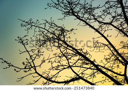 Landscape Scene of branch big Tree Silhouetted against a Beautiful Cloudy Sky at Sunset - stock photo