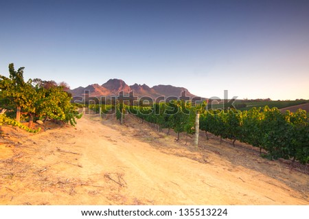 Landscape scenics of vineyards and mountains, near sunset Stellenbosch Winelands, Western Cape, South Africa. - stock photo