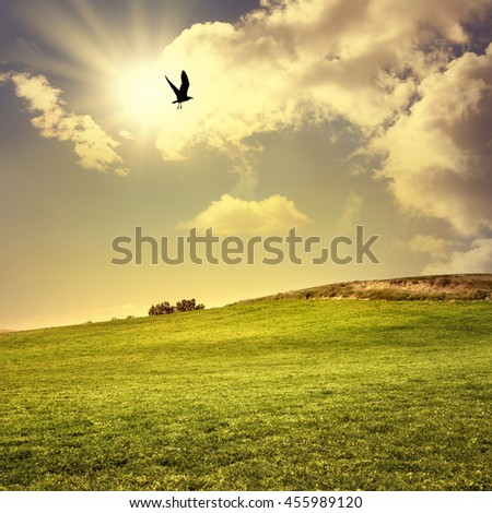 landscape shot of green field and flying bird over sunny sky