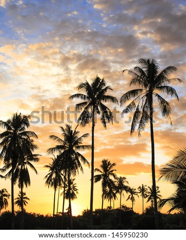 Landscape silhouette coconut tree  in the morning