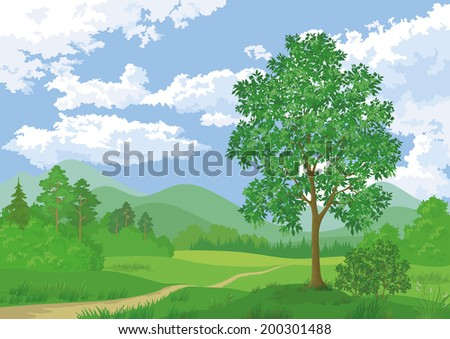 Landscape, summer green forest, maple tree and blue cloudy sky. - stock photo
