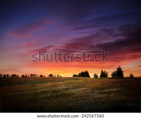 Landscape, sunny dawn in a field - stock photo