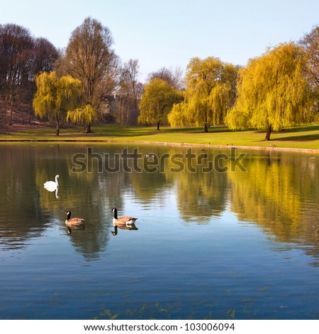 Landscape. The lake in the park.