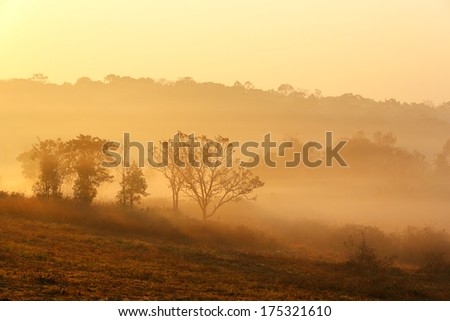 Landscape, tree on meadow at sunrise with sun and mist - stock photo