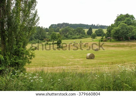 Landscape, trees, Grassland, wood - stock photo