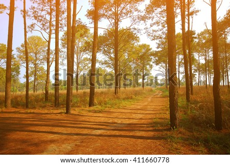 landscape tropical Forest background  and Cross process filter and Soft flare - stock photo
