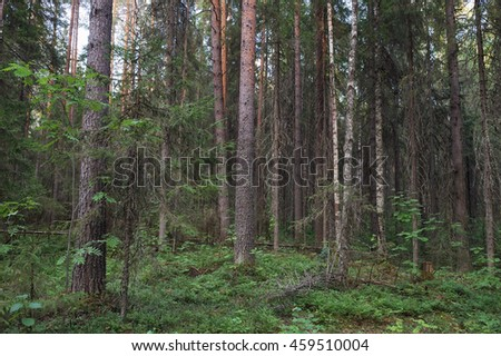 Landscape view deep in forest