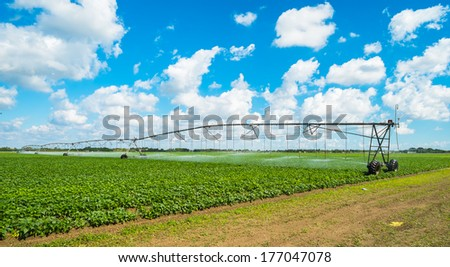 Landscape view of a freshly growing agriculture field with farming irrigation. - stock photo