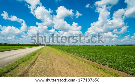 Landscape view of a freshly growing agriculture field with nearby road. - stock photo