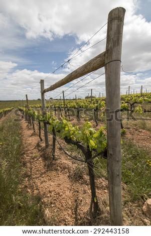 Landscape view of a vineyard located in the Alentejo region, Portugal. - stock photo