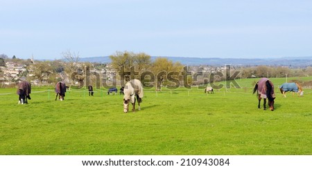 Landscape View of Horse Grazing in a Green Field - stock photo
