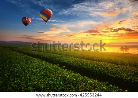 Landscape view of sunrise at green tea field with balloon.