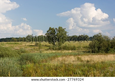 landscape view of the trees, bushes and blue sky - stock photo