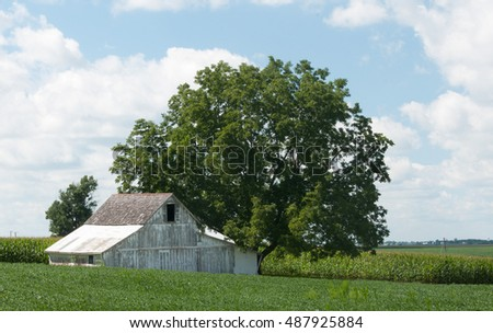 Landscape: vintage white barn with beautiful big tree in farm field