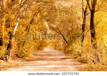 landscape wiith dirt road in autumn forest