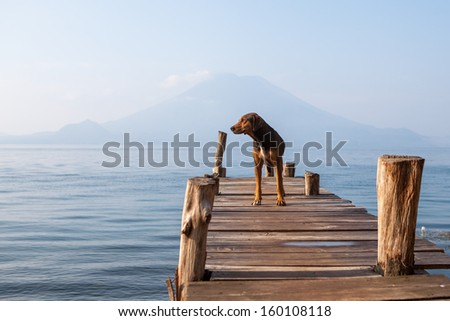 Landscape with a dog on a pier by the lake. - stock photo