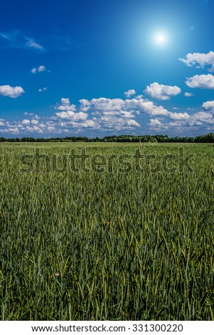 Landscape with a field of green rye, sun and blue sky with clouds. - stock photo