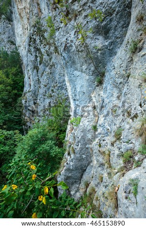 Landscape with a limestone mountain wall and vegetation