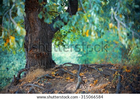 landscape with a lonely tree in the forest - stock photo
