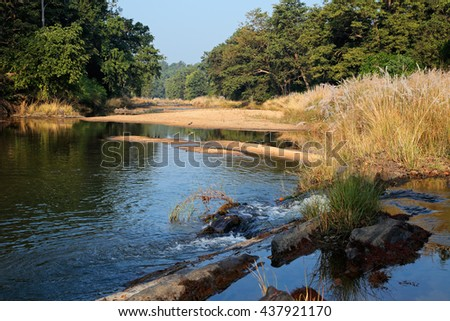 Landscape with a river and forest trees, Kanha National Park, India