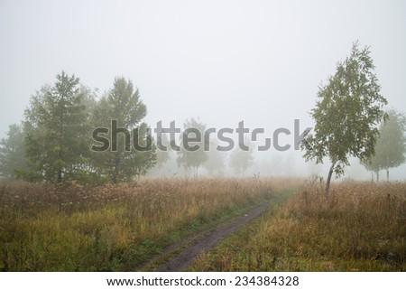 landscape with a road in the fog