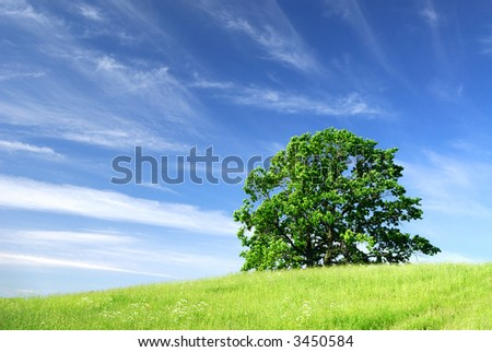 Landscape with a tree and clouds
